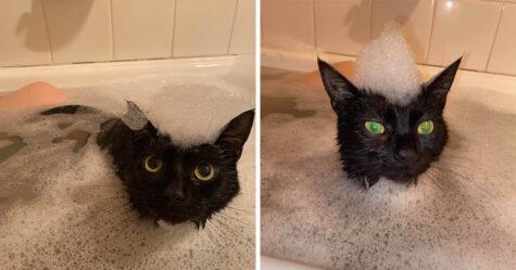 Cette chatte doit absolument rejoindre sa mère chaque fois qu'elle prend un bain