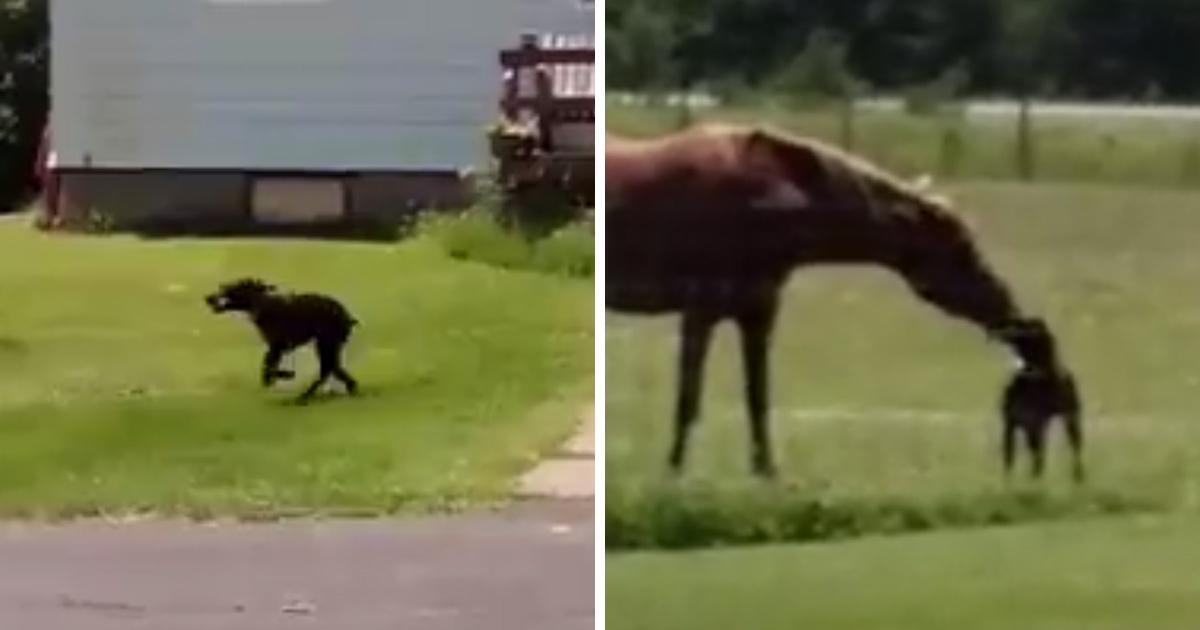 Regardez ce très bon chien apporter une carotte à son ami le cheval