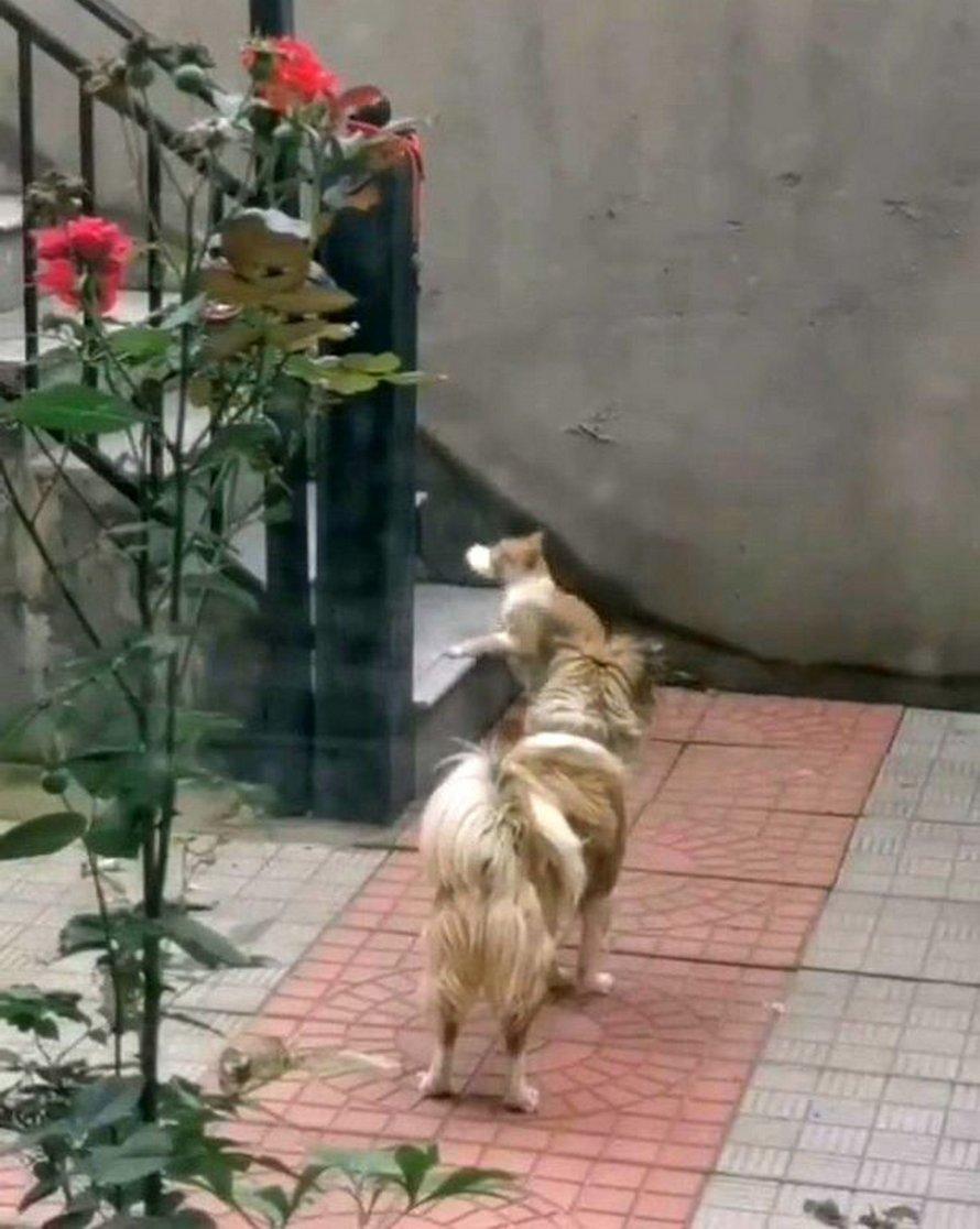 Voici le moment attendrissant où un chien donne sa nourriture à un chat errant affamé après l'avoir vu dans le jardin