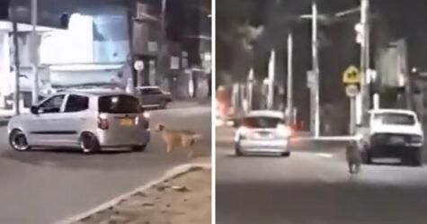 Des images déchirantes montrent le moment où un chien poursuit son maître qui vient de l'abandonner