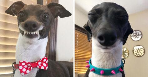Une femme est coincée à la maison à cause de sa maladie chronique, alors elle adopte un chien avec de drôles d'expressions humaines