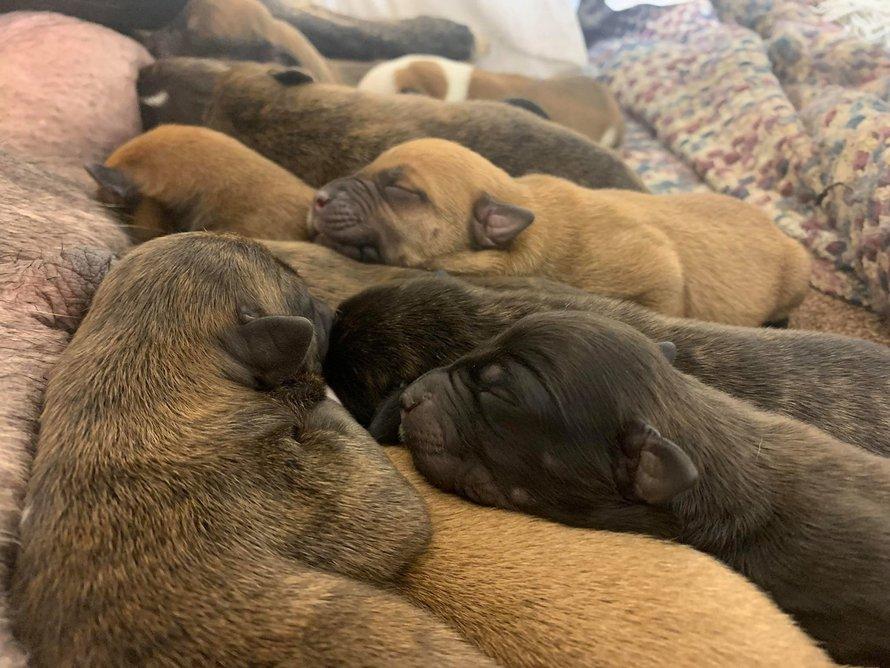 Une chienne errante enceinte surprend ses sauveteurs avec 15 adorables chiots