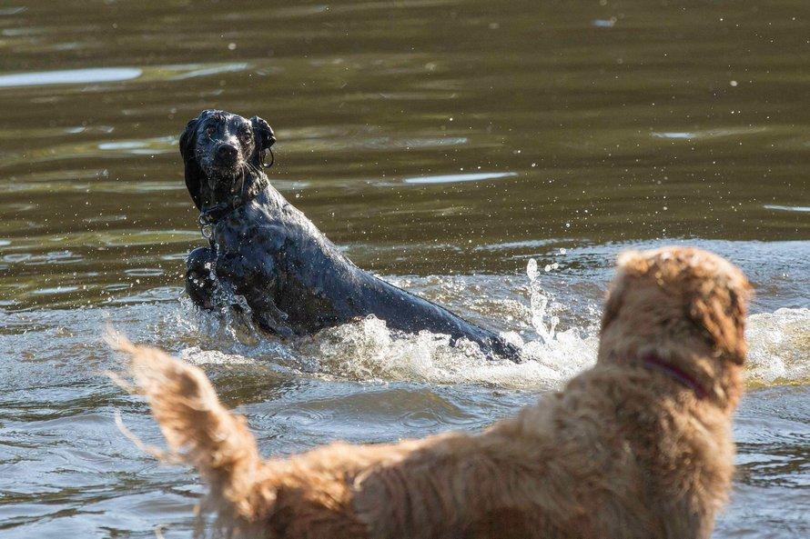 Deux chiens ont été sauvés après avoir été laissés dans une voiture chaude «pendant deux heures» à la plage