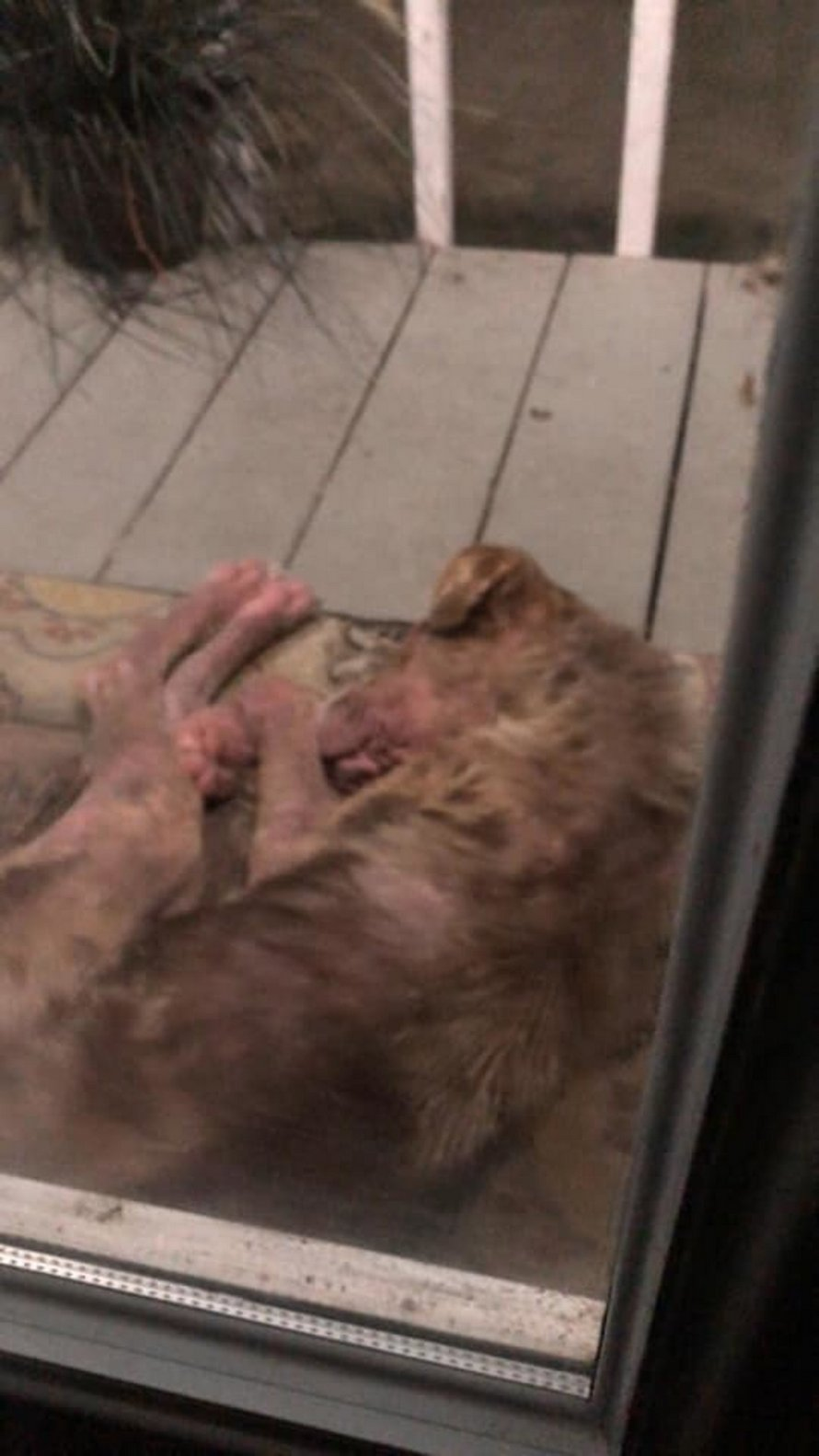 Un chiot se présente à la porte d'une famille et refuse de partir