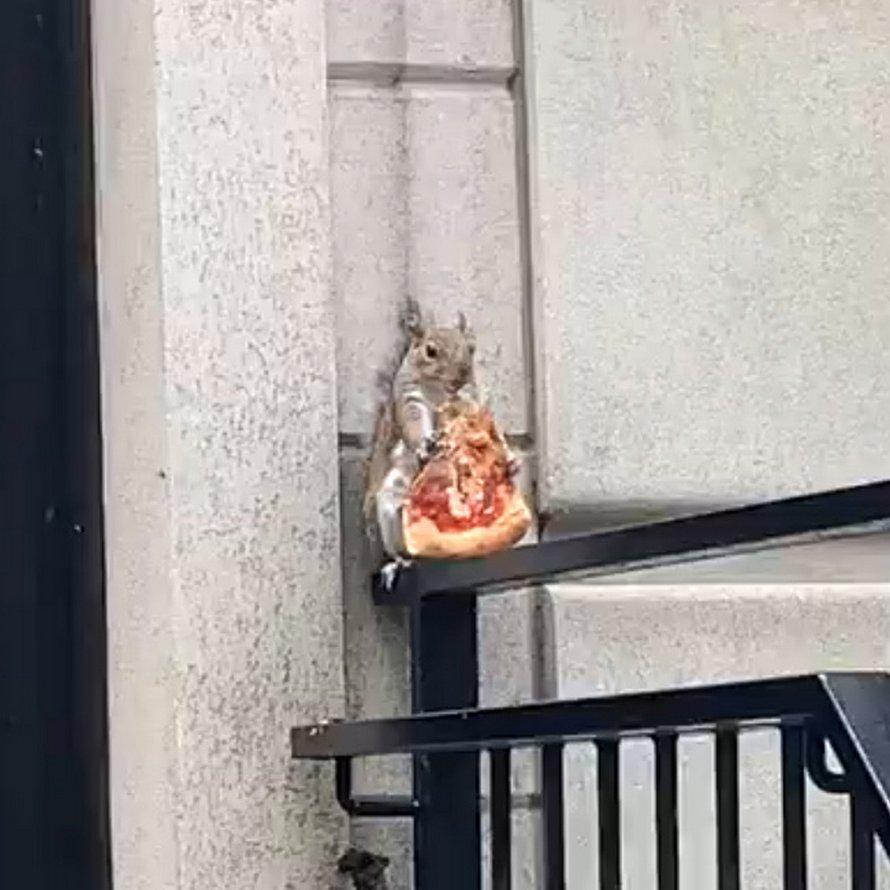 Un écureuil a été filmé en train de manger une tranche de pizza à New York