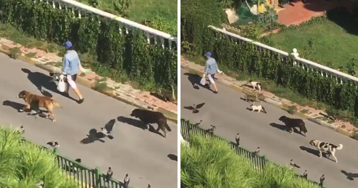 Une femme aperçoit une inconnue à la tête d'un défilé d'animaux dans la rue
