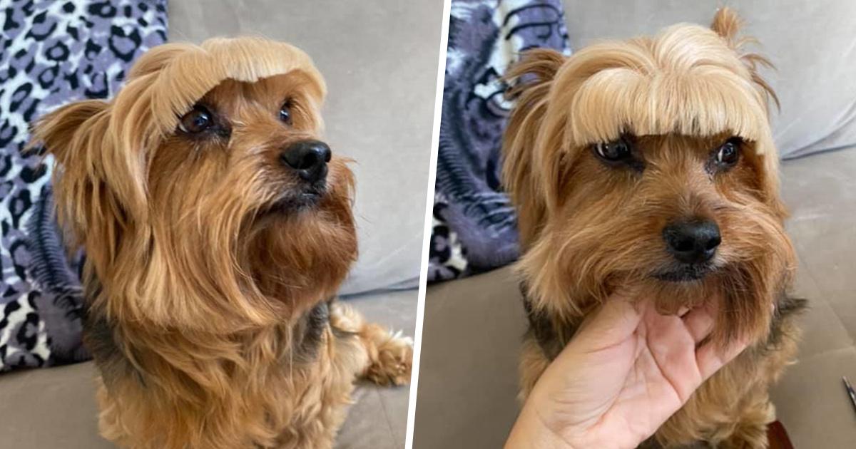 Une mère bien intentionnée décide d'essayer de couper elle-même les poils de son chien