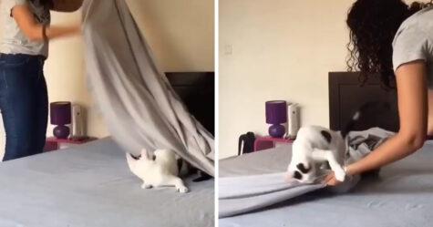 Une femme montre ce que c'est que de faire le lit avec un chat