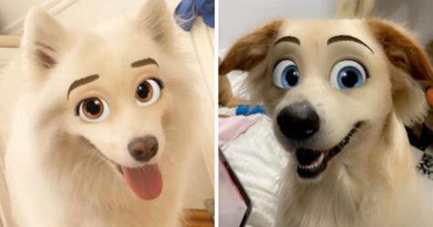 Ce nouveau filtre Snapchat transforme ton chien en personnage Disney
