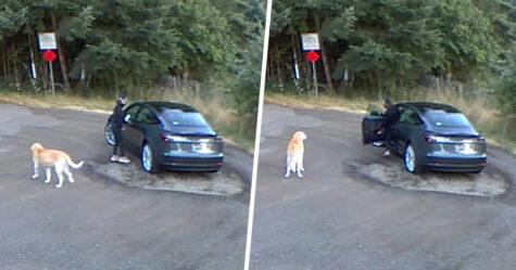 Un golden retriever confus remue la queue alors que sa propriétaire l'abandonne dans un parc