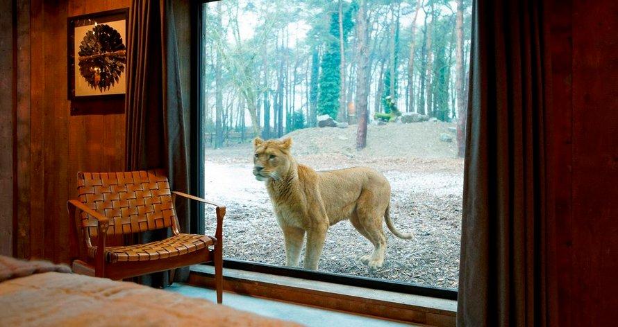 Un nouvel hôtel où tu peux dîner avec des girafes et d'autres animaux ouvrira ses portes en Angleterre