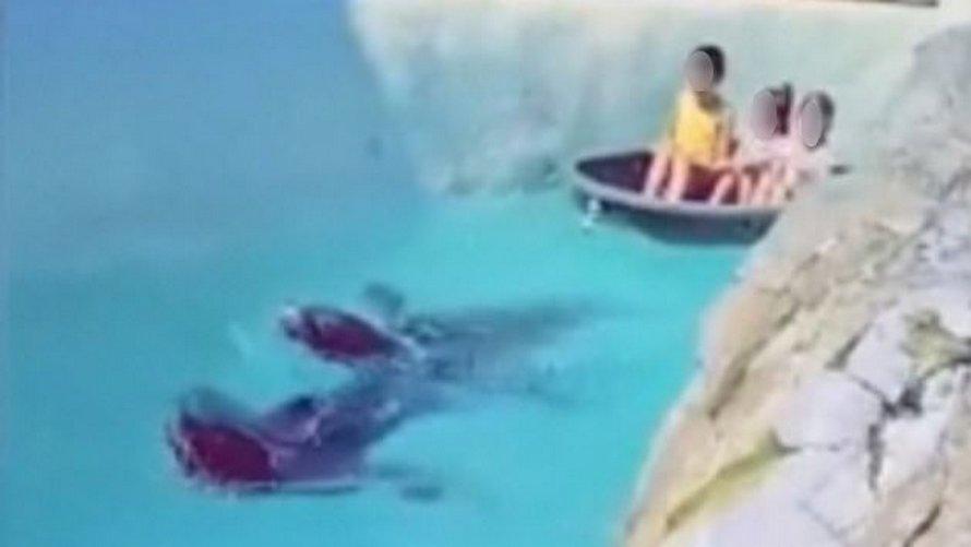 Une otarie est forcée de tirer des enfants dans un bateau avec une corde attachée autour du cou en Belgique