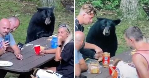 Un ours noir se joint au pique-nique d'une famille pour déguster des sandwichs au beurre d'arachide