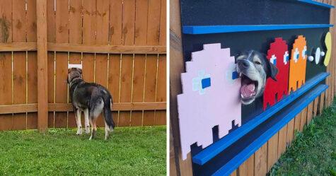 Ces chiens adorent espionner leur quartier à travers un trou dans la clôture, alors leurs propriétaires ont installé des affiches pour faire rire leurs voisins