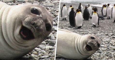Voici des photos de phoques rigolos qui sont incapables d'arrêter de rire