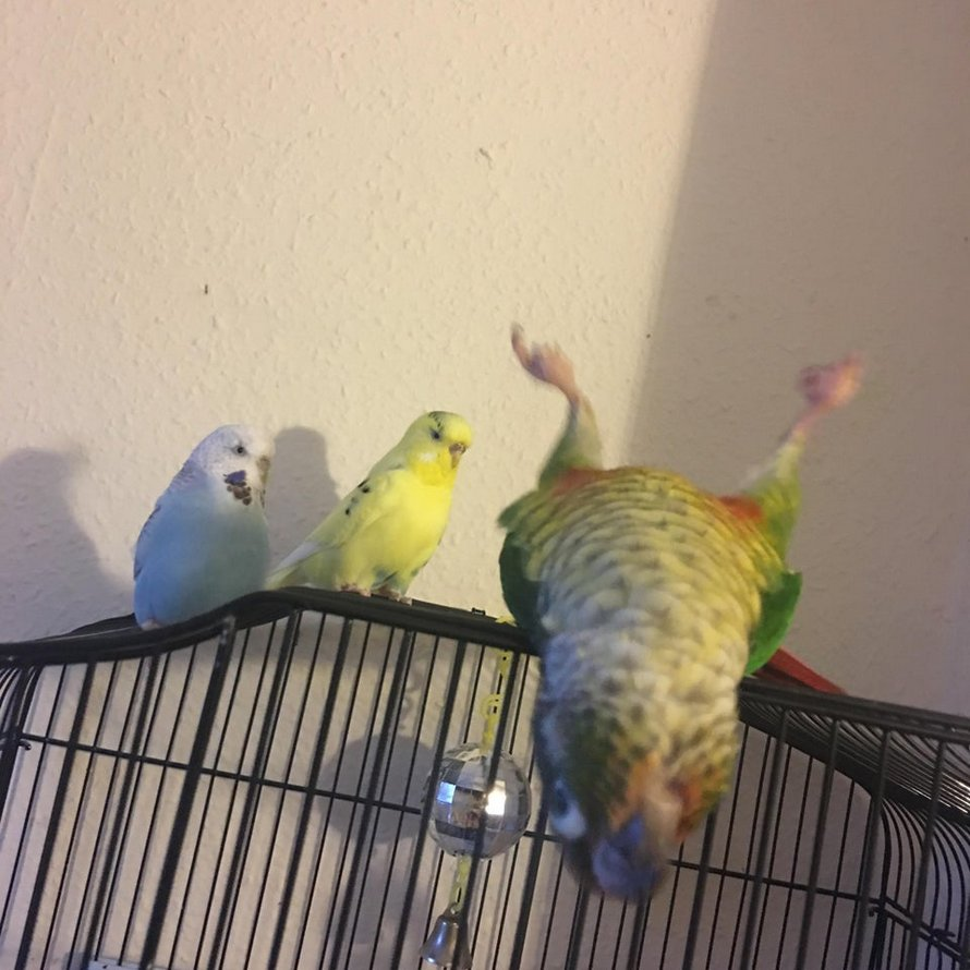 Ces oiseaux sont si drôles que les gens n'ont pas pu s'empêcher de les photographier