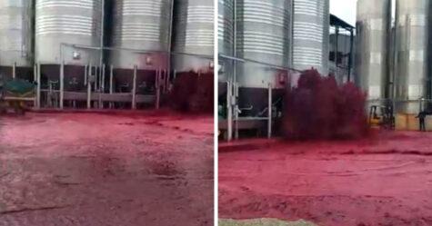 50 000 litres de vin rouge explosent de la cuve d'un domaine viticole
