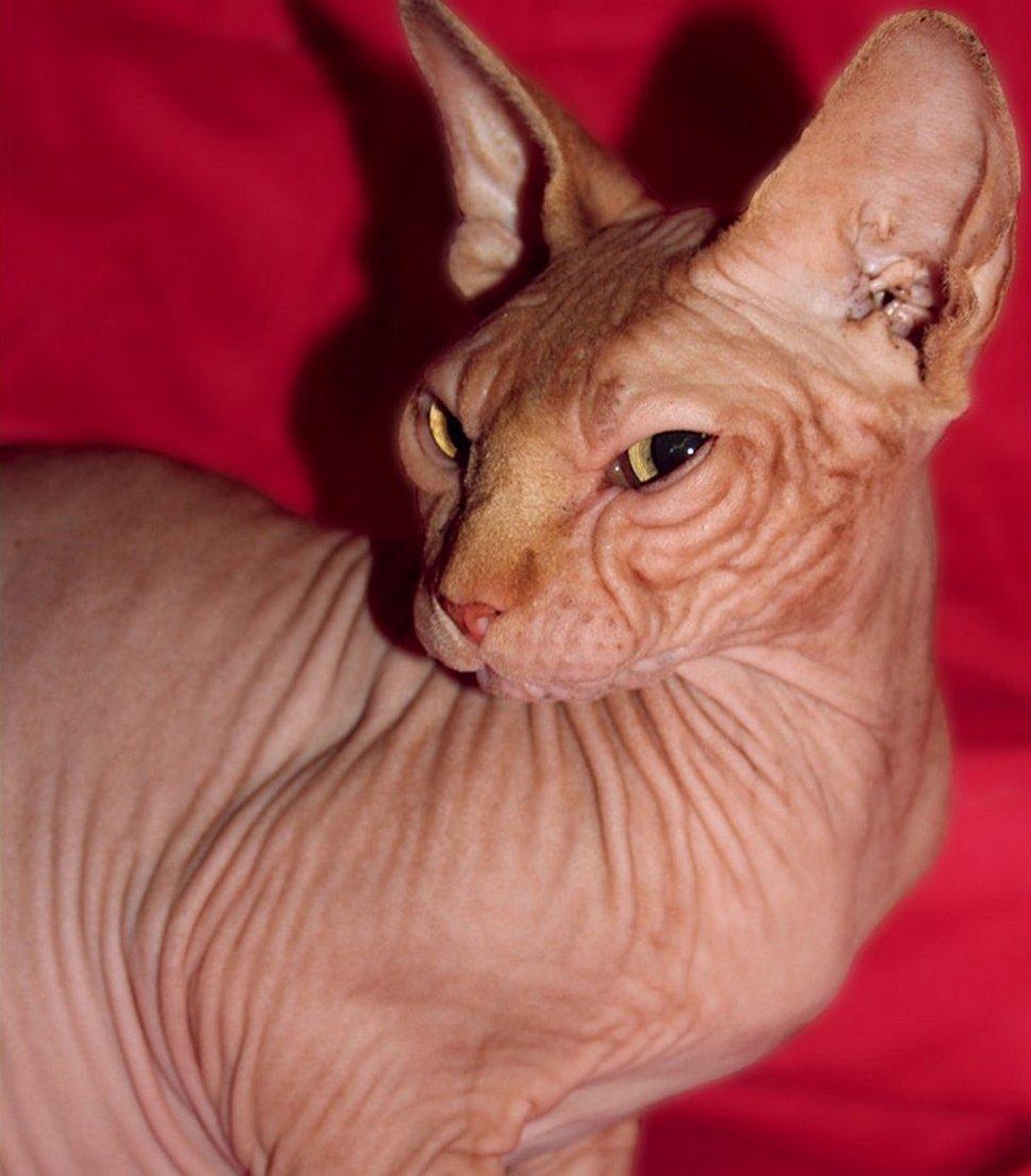 Voici d'adorables photos de Jasper le célèbre chat sans yeux