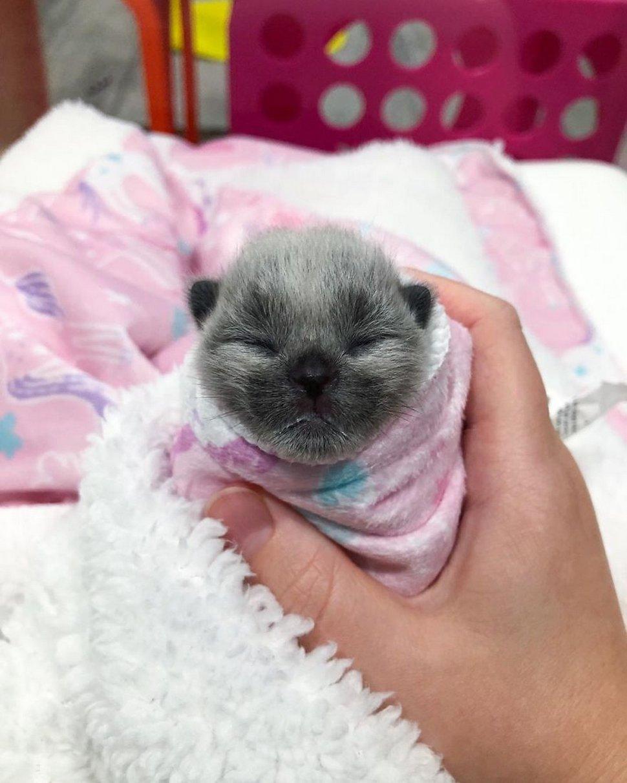 Cet adorable chaton trouvé au bord de la route a une robe d'une couleur unique