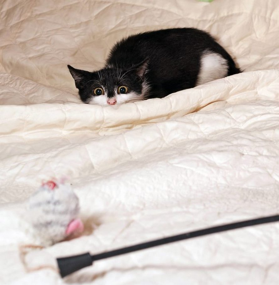 Ces chatons se préparent à leur première attaque-surprise