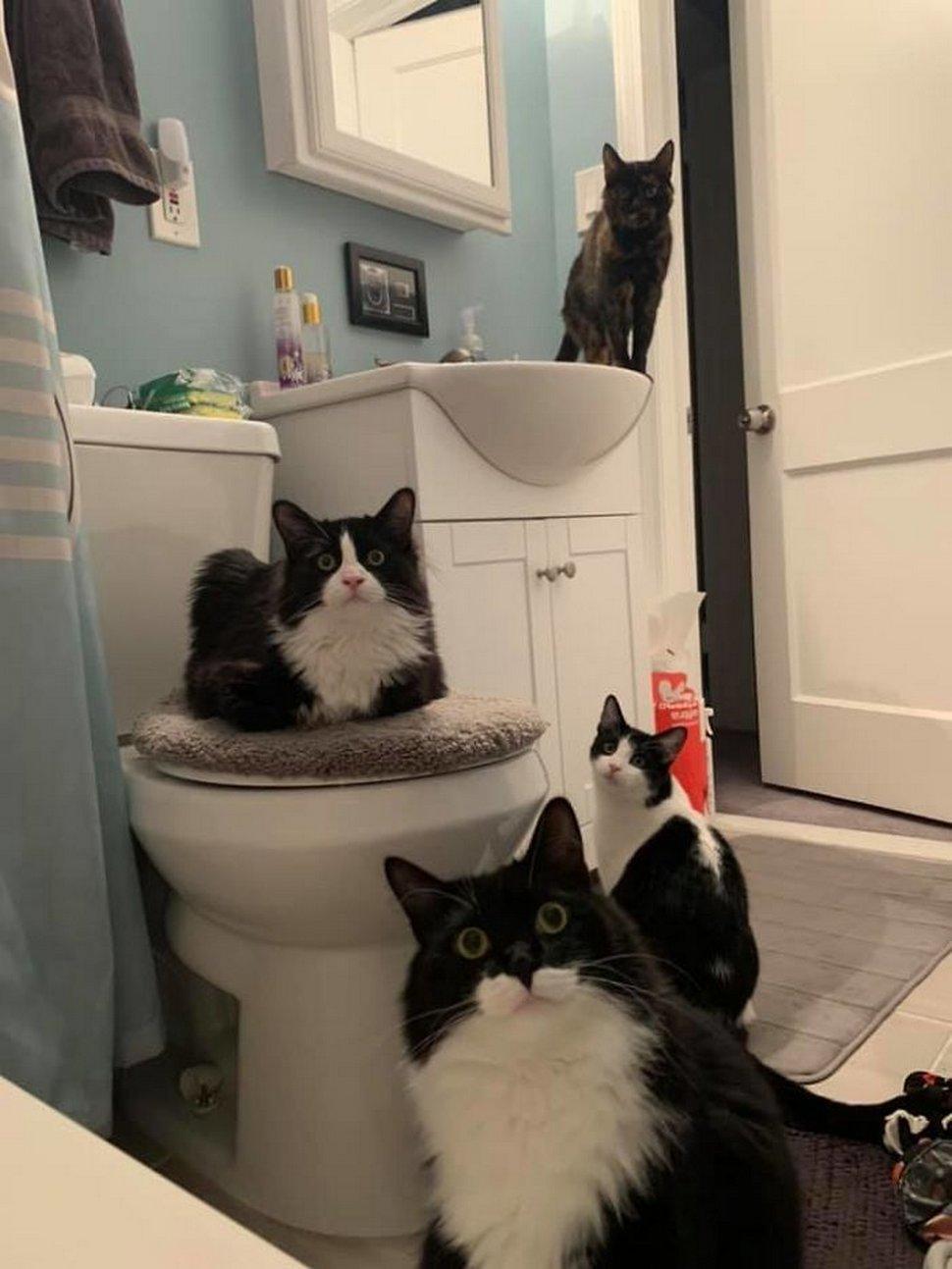 Ces chats envahissent l'espace personnel des gens ! Par Janvier Doyon Chats-envahissent-espace-personnel-006