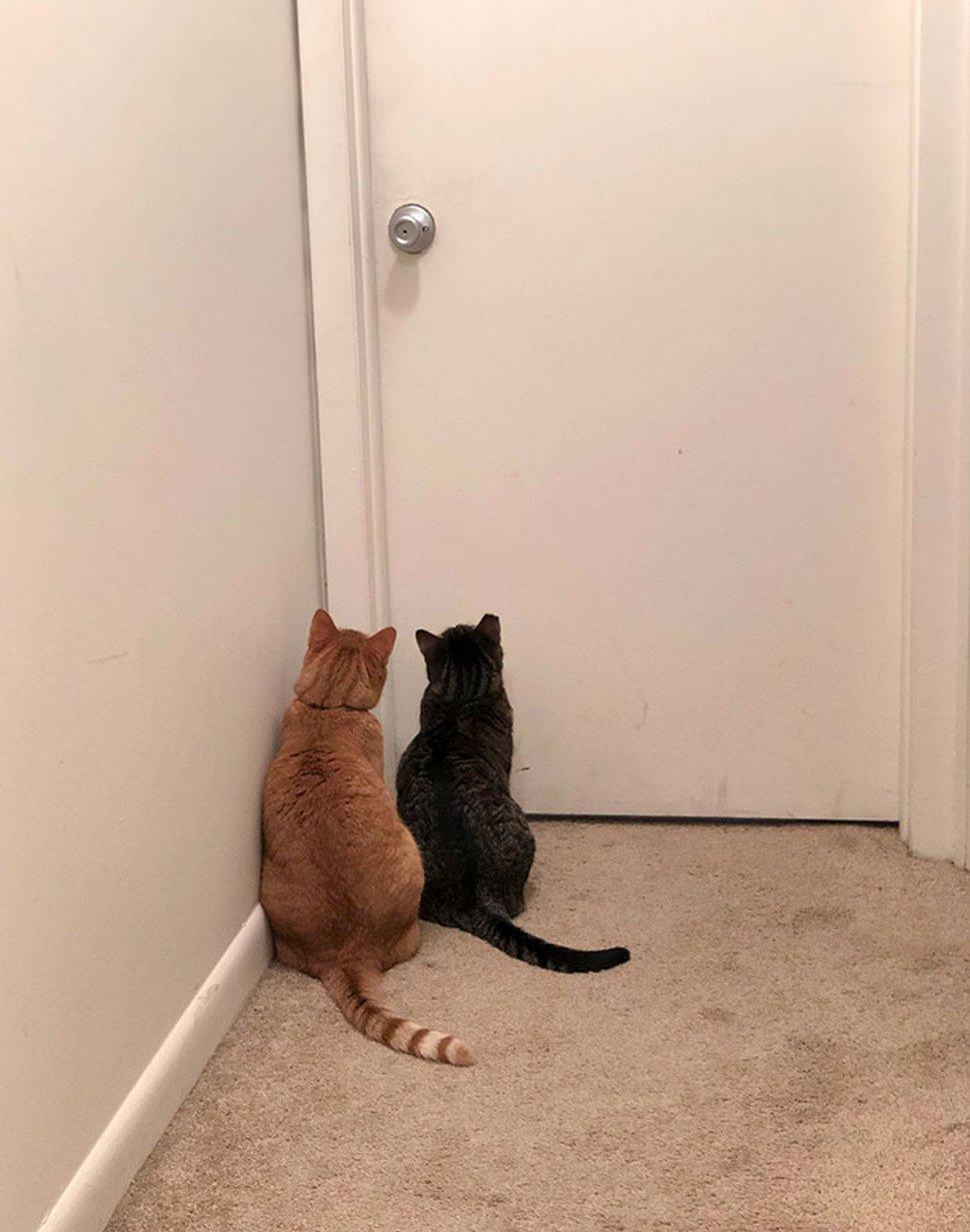 Ces chats envahissent l'espace personnel des gens ! Par Janvier Doyon Chats-envahissent-espace-personnel-010