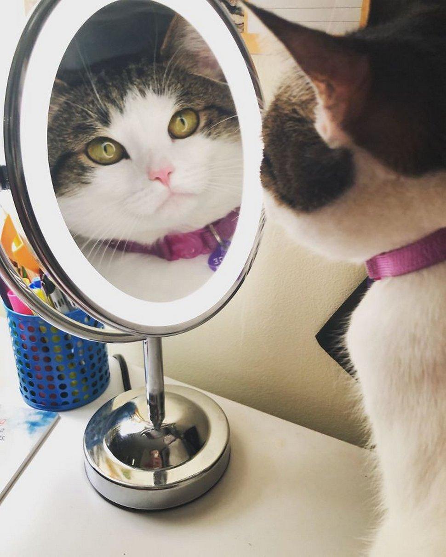 Ces chats envahissent l'espace personnel des gens ! Par Janvier Doyon Chats-envahissent-espace-personnel-015