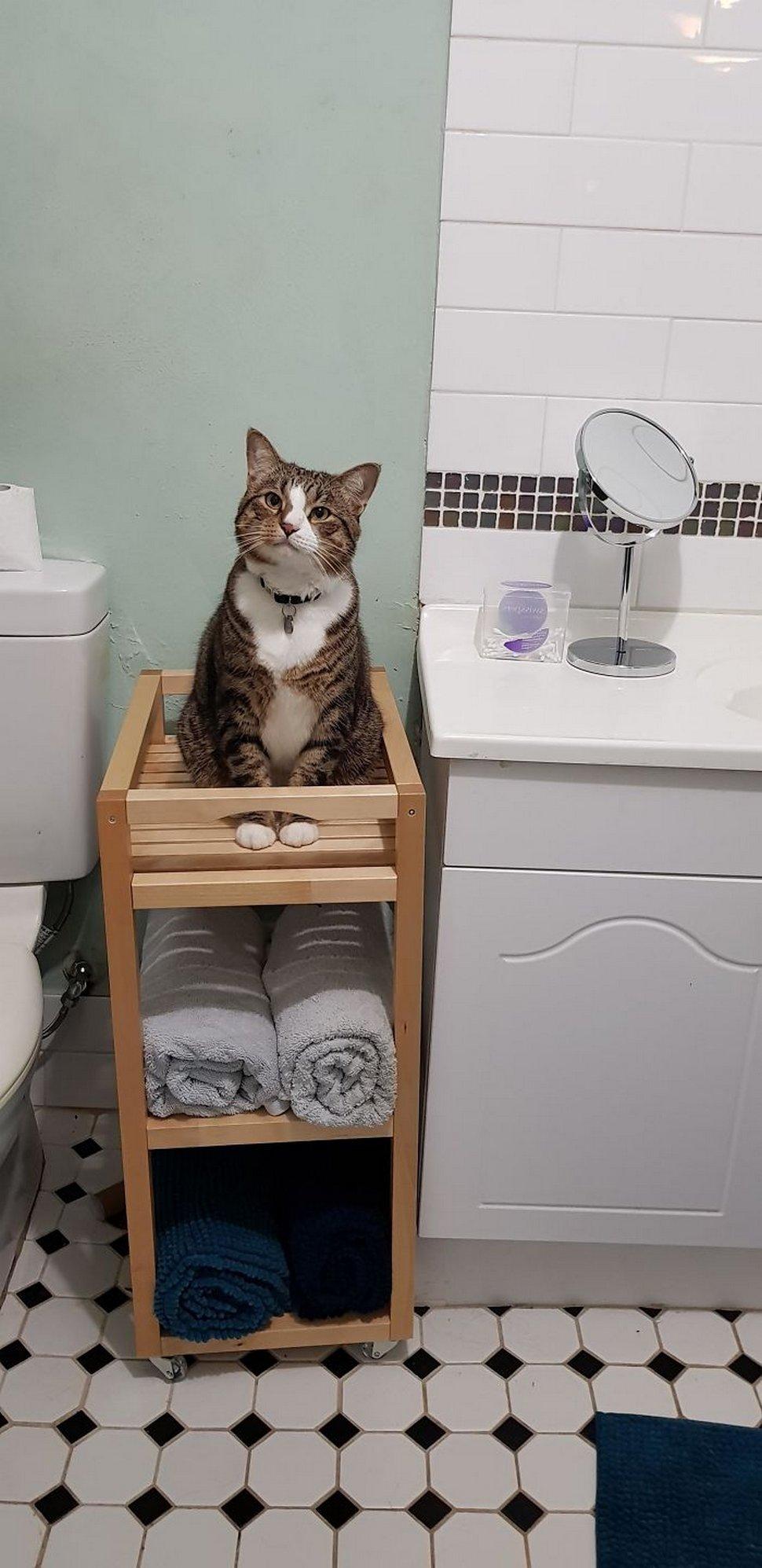 Ces chats envahissent l'espace personnel des gens ! Par Janvier Doyon Chats-envahissent-espace-personnel-018
