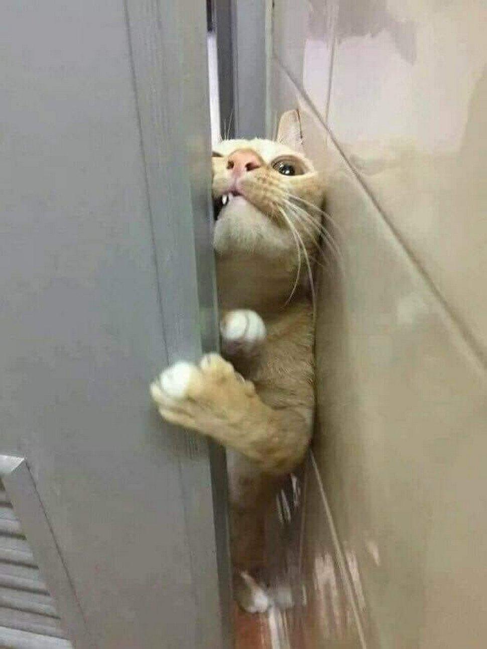 Ces chats envahissent l'espace personnel des gens ! Par Janvier Doyon Chats-envahissent-espace-personnel-020
