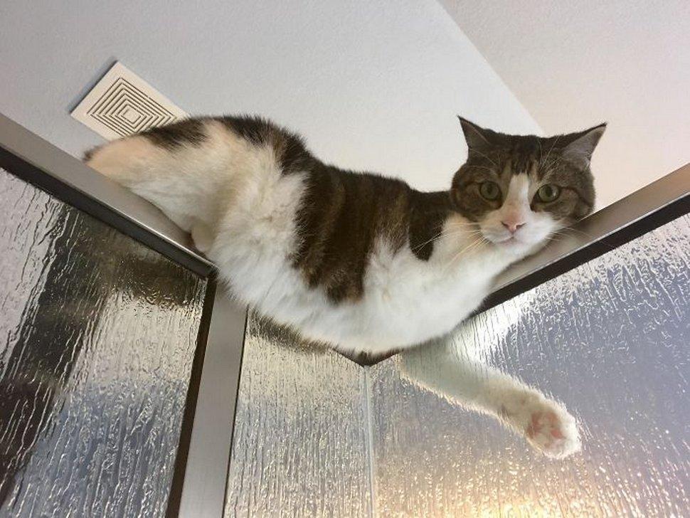 Ces chats envahissent l'espace personnel des gens ! Par Janvier Doyon Chats-envahissent-espace-personnel-024