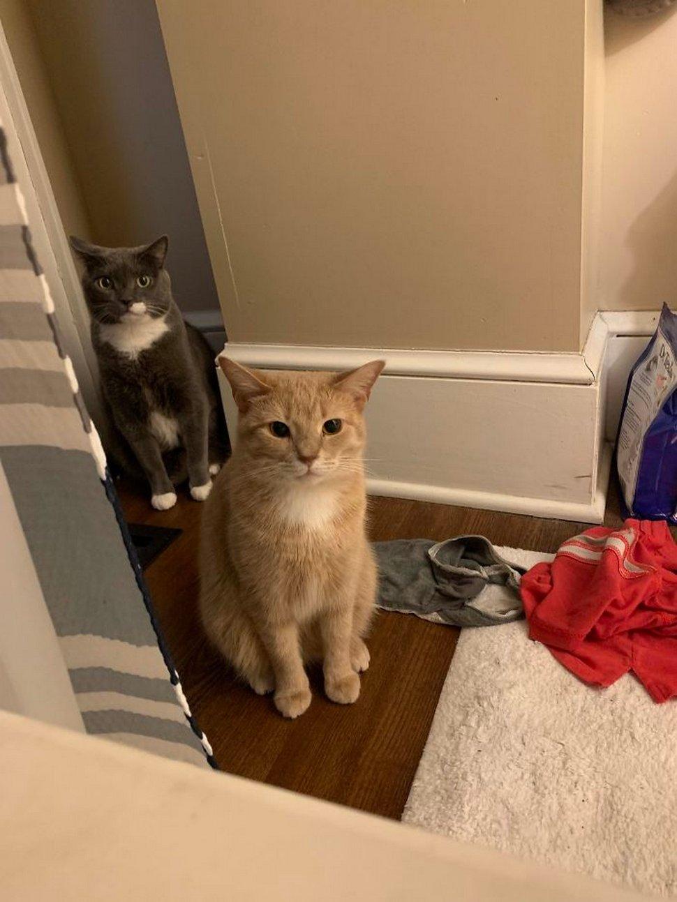 Ces chats envahissent l'espace personnel des gens ! Par Janvier Doyon Chats-envahissent-espace-personnel-027