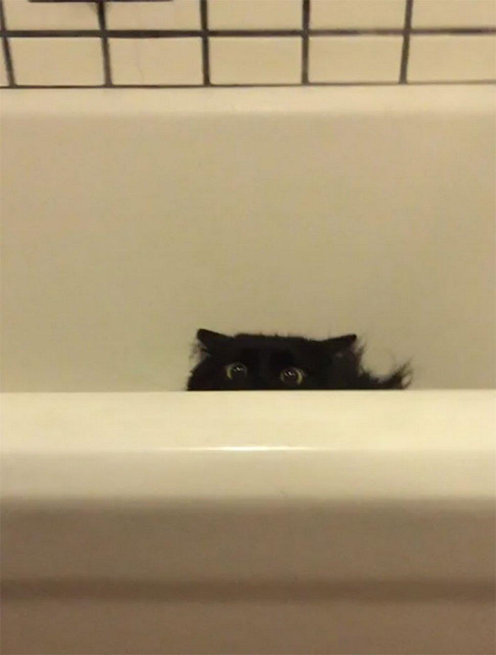 Ces chats envahissent l'espace personnel des gens ! Par Janvier Doyon Chats-envahissent-espace-personnel-028