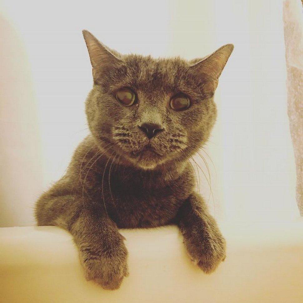 Ces chats envahissent l'espace personnel des gens ! Par Janvier Doyon Chats-envahissent-espace-personnel-030