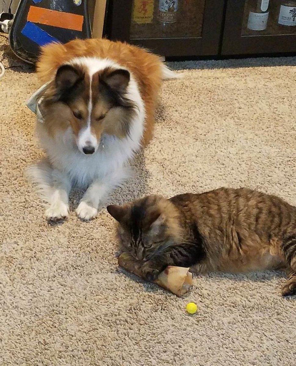 Ces photos hilarantes montrent des chats qui font les cons avec des chiens
