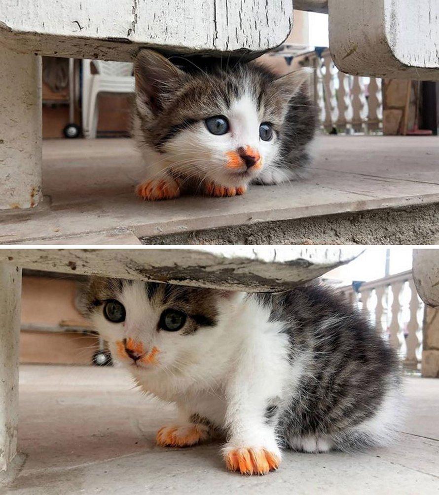 Ces chats ont fait un gâchis en mangeant et ont été surpris par leurs propriétaires