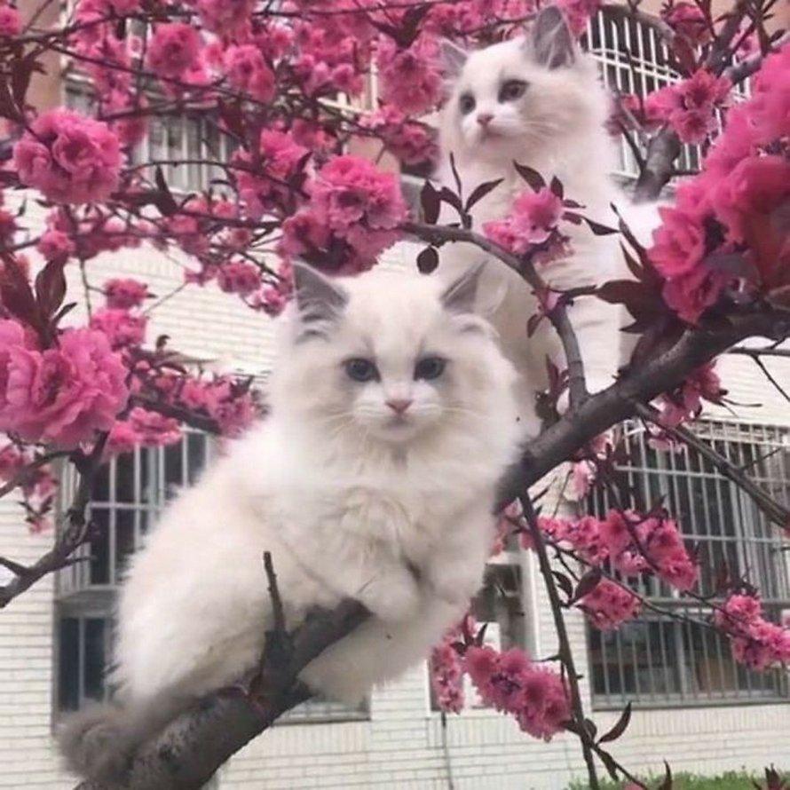 Ces oiseaux ressemblent étrangement à des chats ! By Ipnoze.com Chats-perches-dans-arbres-comme-oiseaux-01