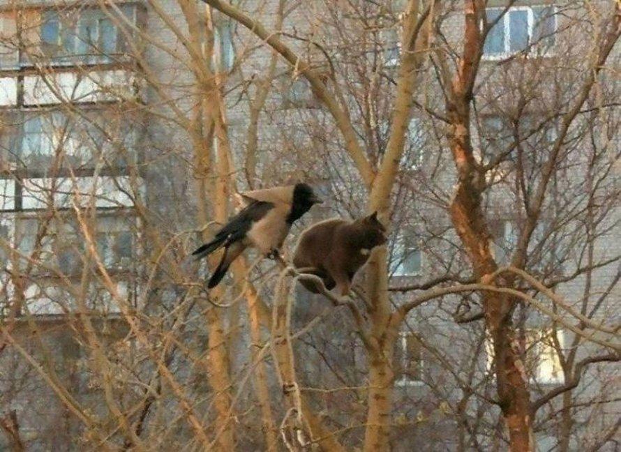 Ces oiseaux ressemblent étrangement à des chats ! By Ipnoze.com Chats-perches-dans-arbres-comme-oiseaux-03