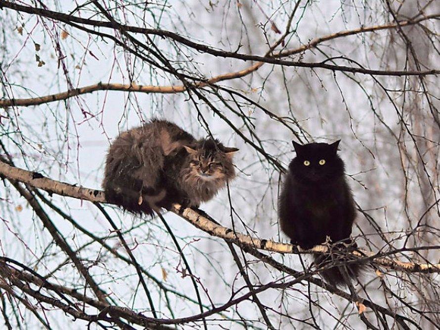Ces oiseaux ressemblent étrangement à des chats ! By Ipnoze.com Chats-perches-dans-arbres-comme-oiseaux-04
