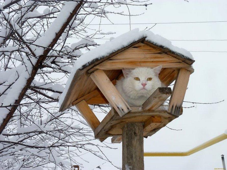 Ces oiseaux ressemblent étrangement à des chats ! By Ipnoze.com Chats-perches-dans-arbres-comme-oiseaux-06