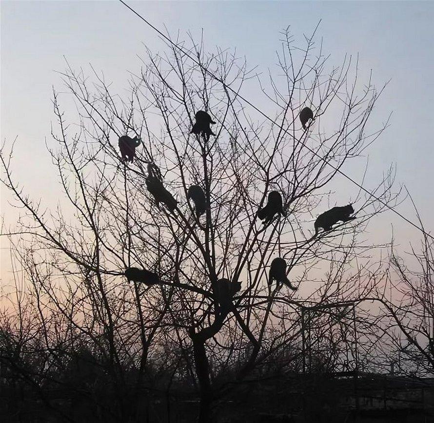 Ces oiseaux ressemblent étrangement à des chats ! By Ipnoze.com Chats-perches-dans-arbres-comme-oiseaux-07