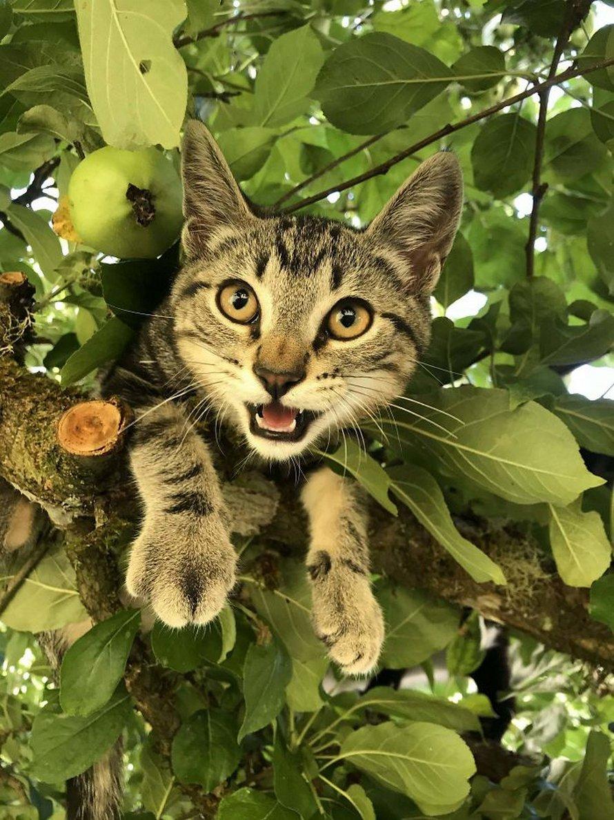 Ces oiseaux ressemblent étrangement à des chats ! By Ipnoze.com Chats-perches-dans-arbres-comme-oiseaux-08