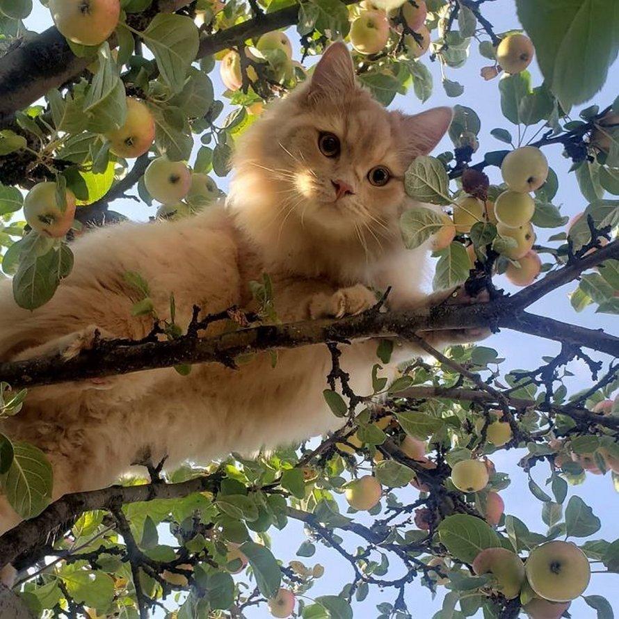 Ces oiseaux ressemblent étrangement à des chats ! By Ipnoze.com Chats-perches-dans-arbres-comme-oiseaux-09