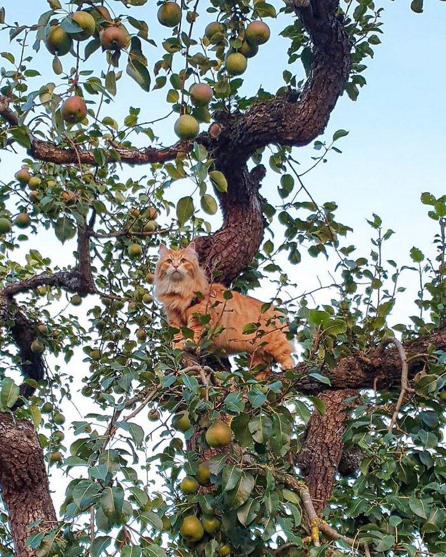 Ces oiseaux ressemblent étrangement à des chats ! By Ipnoze.com Chats-perches-dans-arbres-comme-oiseaux-10