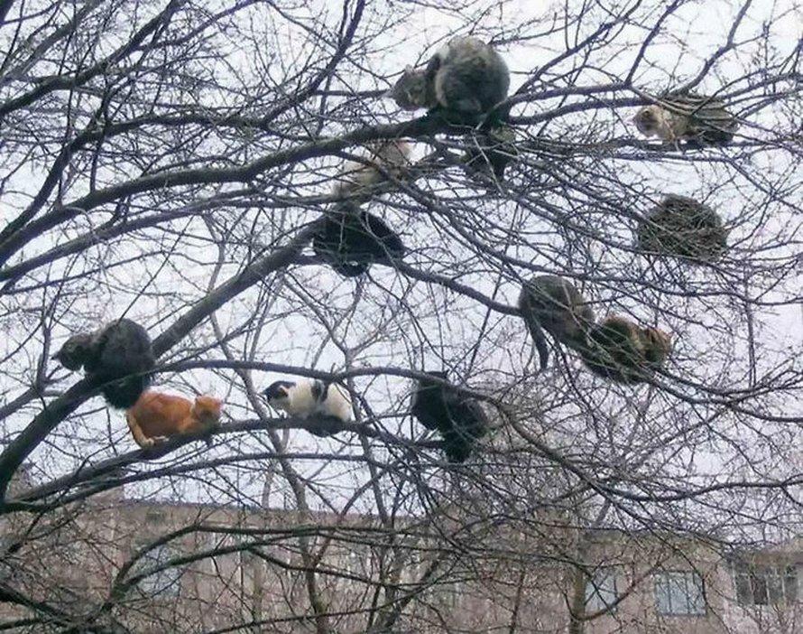 Ces oiseaux ressemblent étrangement à des chats ! By Ipnoze.com Chats-perches-dans-arbres-comme-oiseaux-11