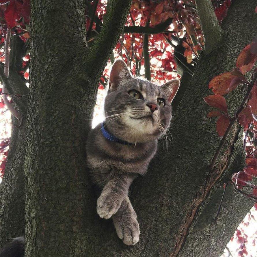 Ces oiseaux ressemblent étrangement à des chats ! By Ipnoze.com Chats-perches-dans-arbres-comme-oiseaux-12