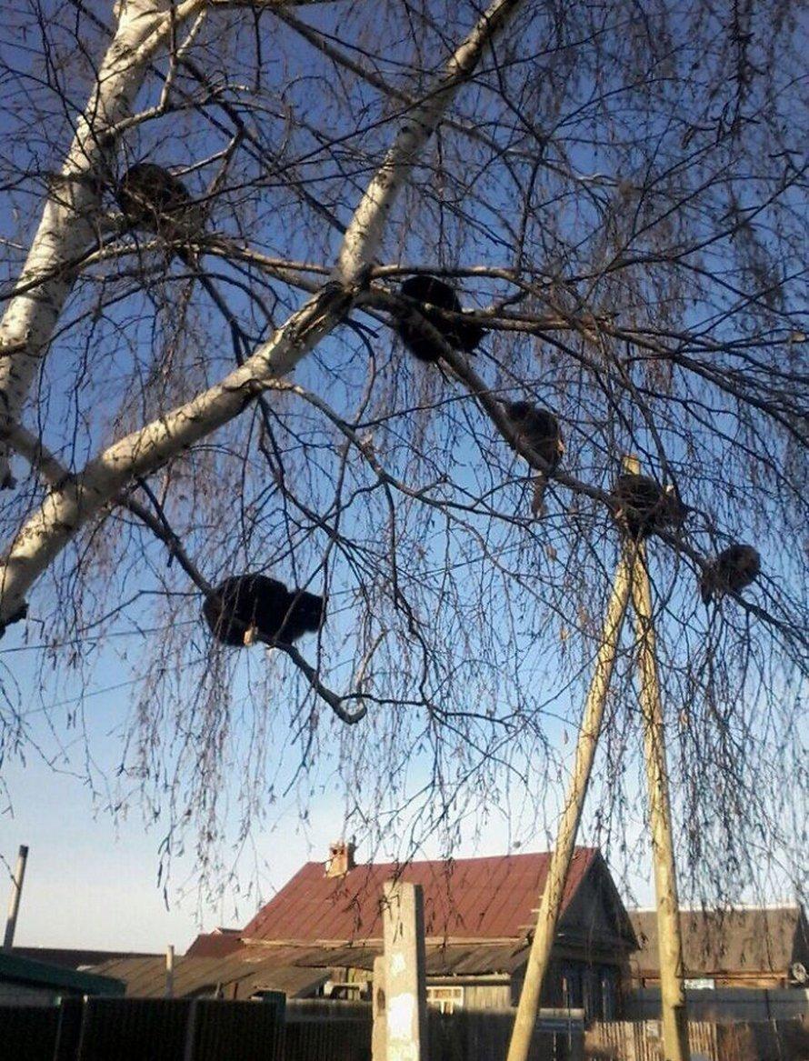 Ces oiseaux ressemblent étrangement à des chats ! By Ipnoze.com Chats-perches-dans-arbres-comme-oiseaux-14
