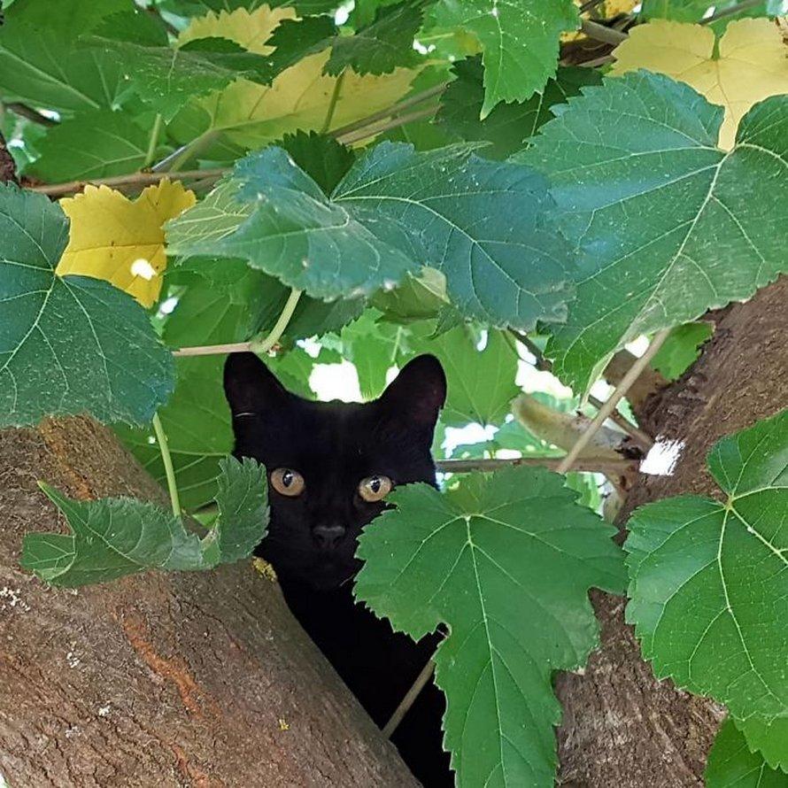 Ces oiseaux ressemblent étrangement à des chats ! By Ipnoze.com Chats-perches-dans-arbres-comme-oiseaux-15