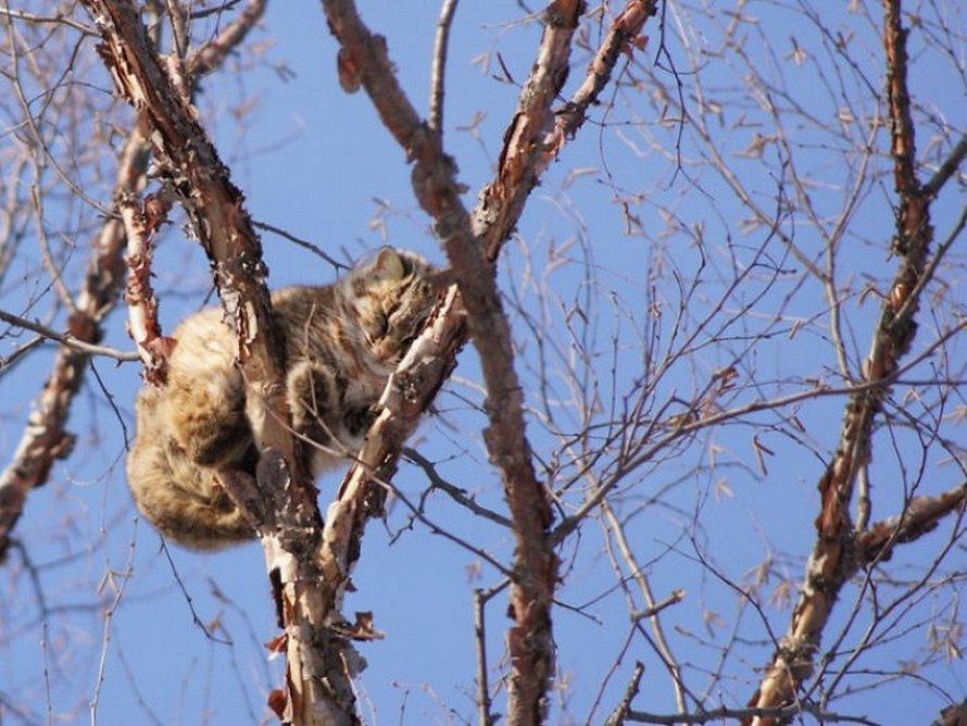 Ces oiseaux ressemblent étrangement à des chats ! By Ipnoze.com Chats-perches-dans-arbres-comme-oiseaux-17