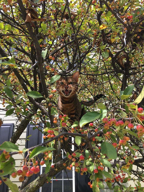 Ces oiseaux ressemblent étrangement à des chats ! By Ipnoze.com Chats-perches-dans-arbres-comme-oiseaux-19
