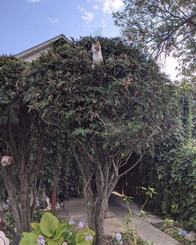 Ces oiseaux ressemblent étrangement à des chats ! By Ipnoze.com Chats-perches-dans-arbres-comme-oiseaux-20